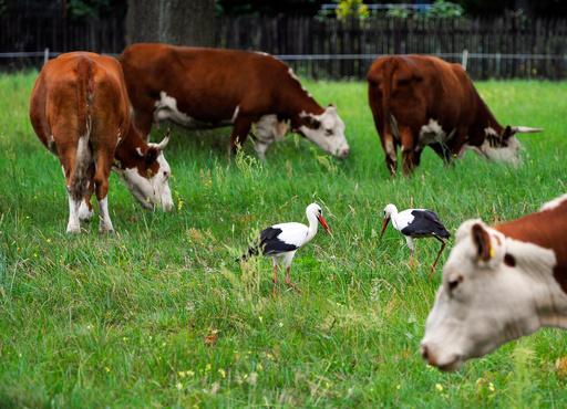 非定型の「狂牛病」の症例1件、ポーランドで確認