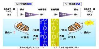 世界初・生体素材とイオンでつながるバイオトランスデューサを開発
