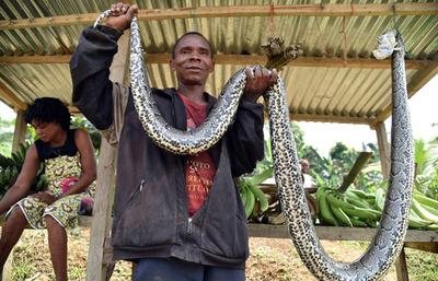 「ヘビどうだい?」赤道ギニアの露天商