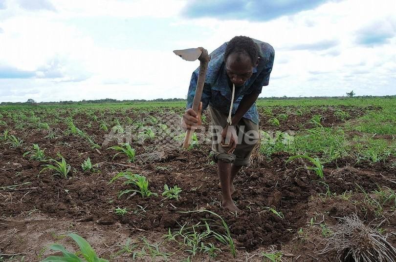 気候変動、作物が生育不能になる「ホットスポット」を特定