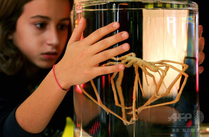 ウミグモの「鼓動する腸」、研究