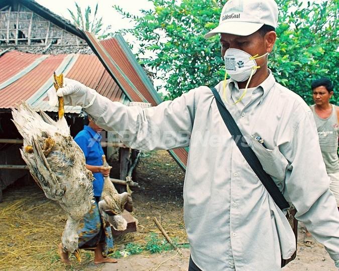 カンボジアで鳥インフルで35歳男性が死亡、今年8人目