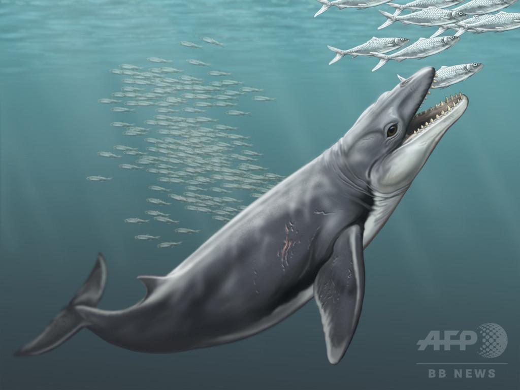 古代のヒゲクジラ類、肉食動物のような鋭利な歯を持つ 研究