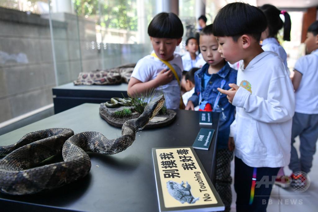 ペットの毒ヘビにかまれ陝西省の女性が昏睡状態に インターネットで購入