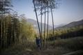 【AFP記者コラム】中国のタケノコ産地、取材してみた