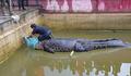体長4mのペットのワニに襲われた女性が死亡 インドネシア