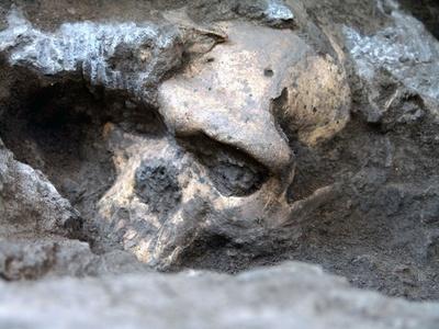 「初期人類は単一種」の可能性、180万年前の頭蓋骨発見が示唆 グルジア研究