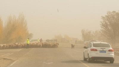 砂嵐が発生、家畜連れの遊牧民をエスコート 新疆