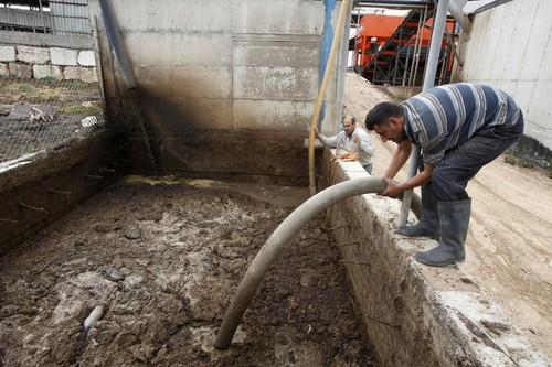 パレスチナの酪農一家、牛のふんを発電に利用