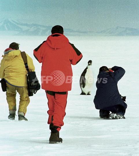南極のコウテイペンギン、推測2倍の約60万羽 初の衛星調査で