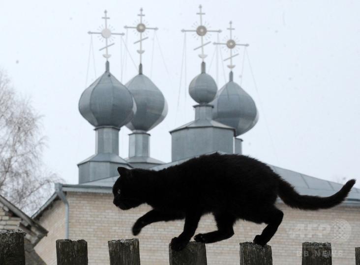 黒猫に迫るハロウィーンの危機 ハンガリー