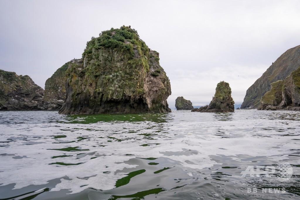 カムチャツカ海洋生物大量死、原因は有害な藻の発生 ロシア科学者