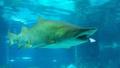 サメが別のサメを丸のみ、韓国・ソウルの水族館