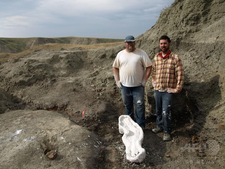 カールした角の新種恐竜発見、トリケラトプスの仲間 研究