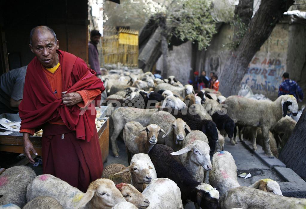 インドの「小チベット」でエコ・ツーリズム