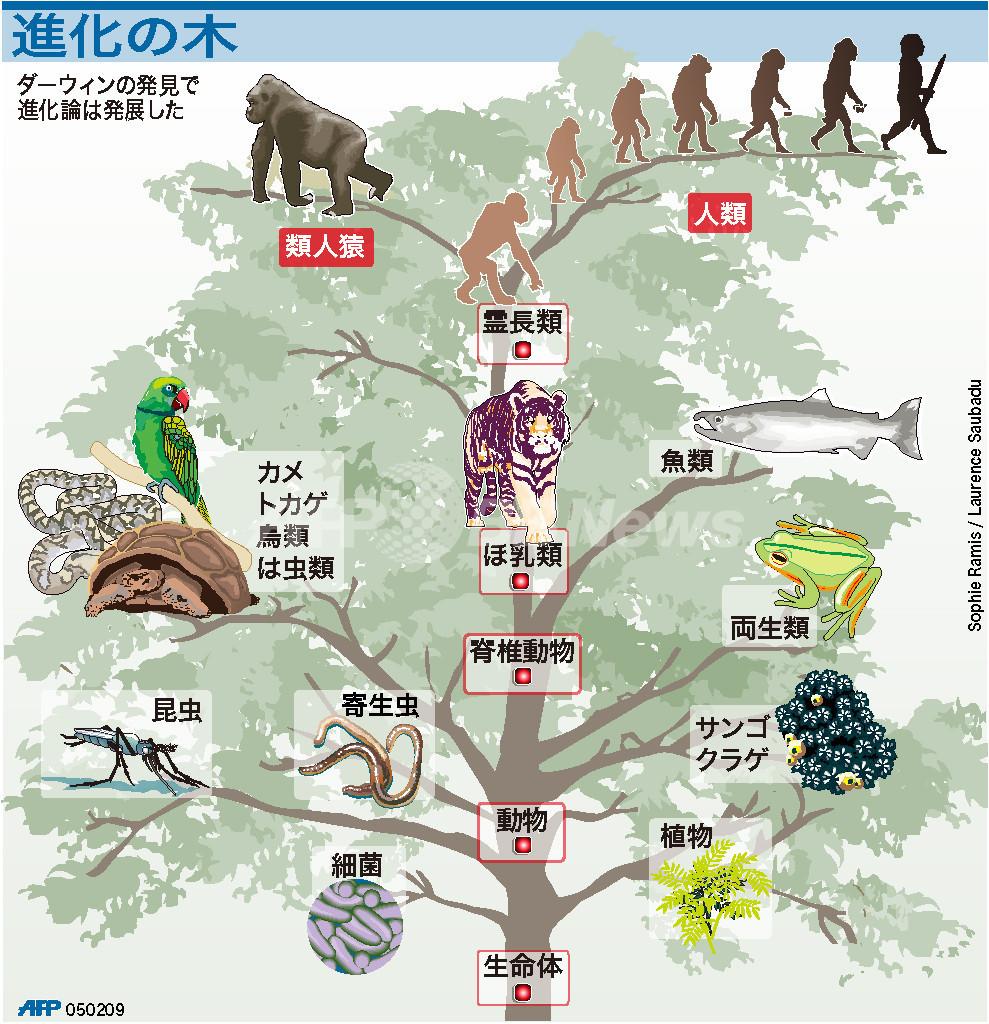 【図解】ダーウィンの「進化の木」