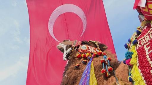 動画:トルコでラクダ相撲、迫力満点のぶつかり合い