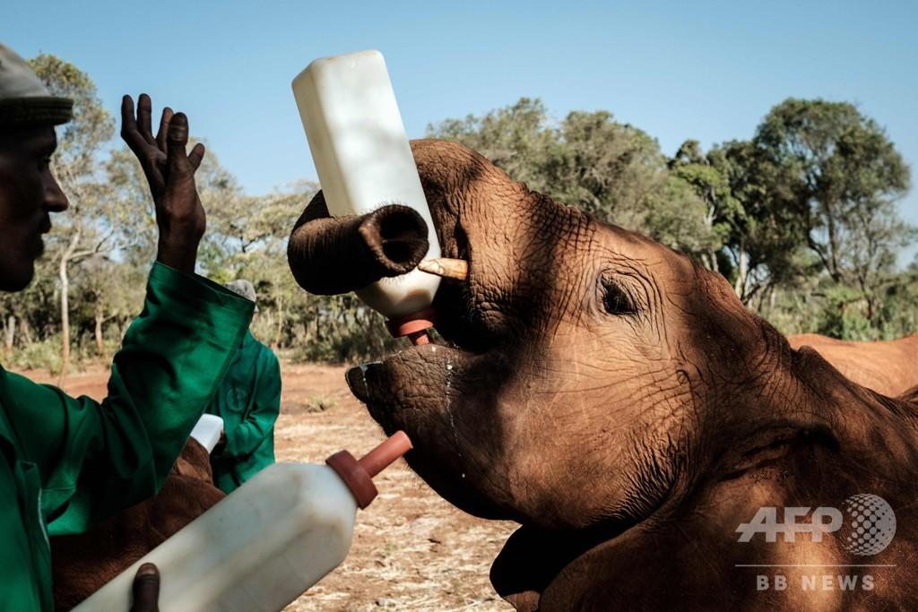 親のいない子ゾウたちを再び元気に、ケニア国立公園の飼育センター