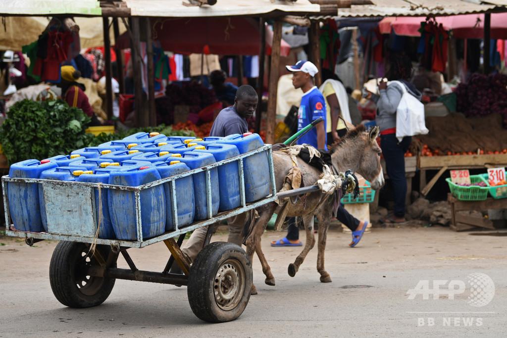 中国伝統薬用のロバ皮生産を禁止、ロバの盗難多発で失業者も ケニア