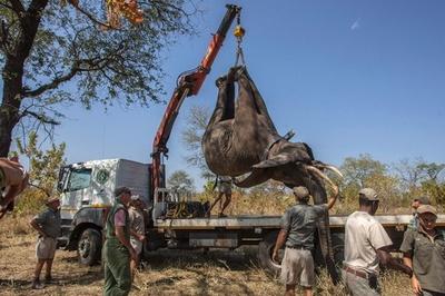 ゾウ500頭を移送、繁殖および観光面での注目を期待 マラウイ