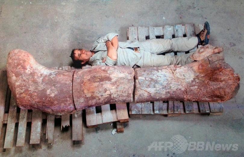 世界最大級の恐竜化石を発見、体重はゾウ14頭分 アルゼンチン