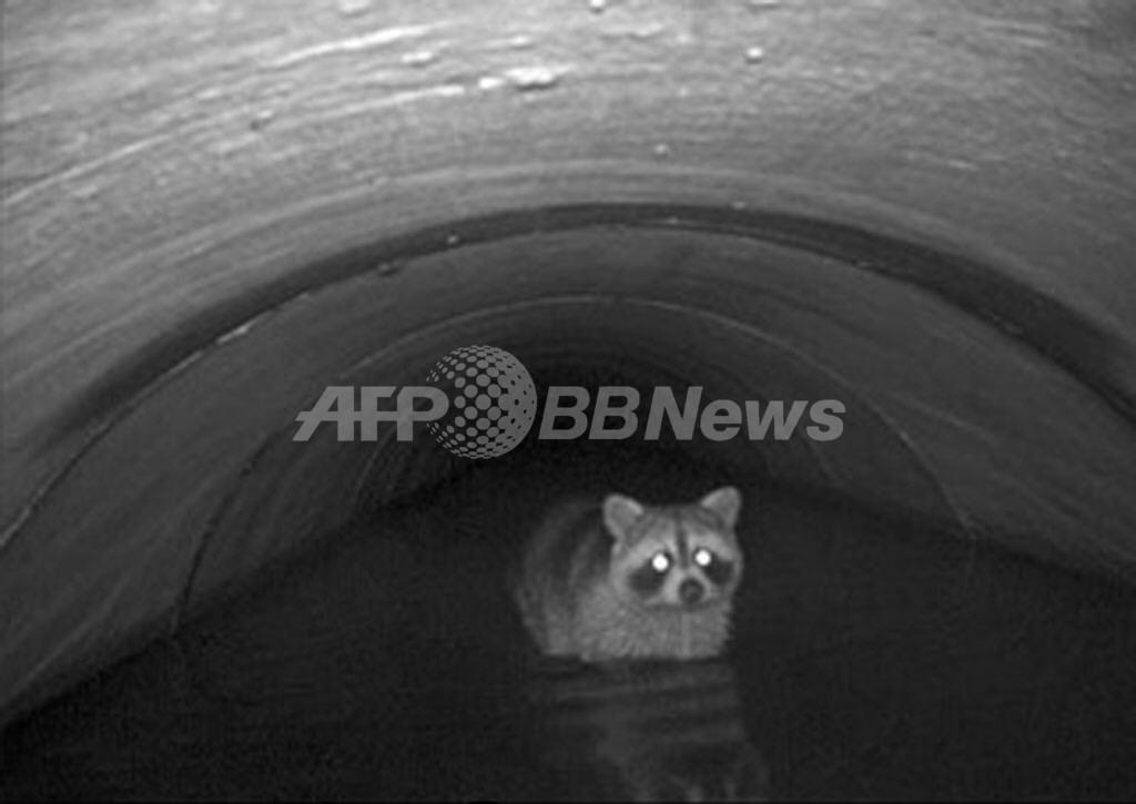 排水溝で高速道路を安全横断、野生動物の実態調査