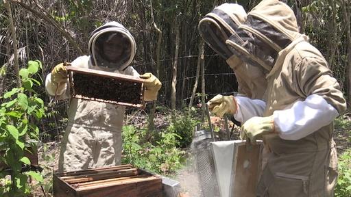 動画:ミツバチが癒やす内戦の傷、養蜂で復興目指すコロンビアの村