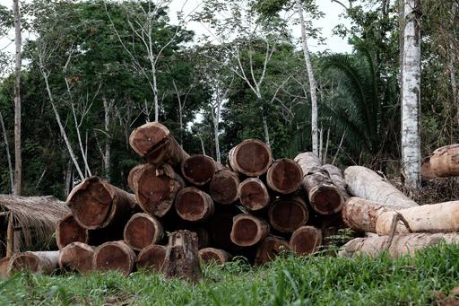 熱帯林破壊、昨年は「毎分サッカー場30面分」のペース 研究