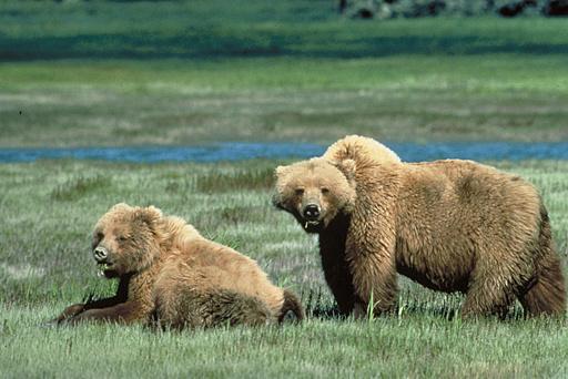 クマ襲撃か、母親と生後10か月の女児死亡 カナダ