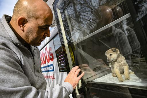 野良犬・野良猫を住民と当局と獣医師が三位一体で保護 イスタンブール