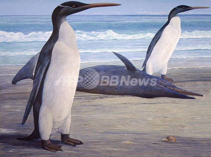 「エレガントな」巨大ペンギンの姿を復元、ニュージーランド