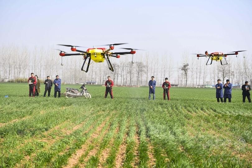 春の小麦畑、ドローンで農薬散布 安徽省