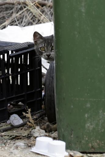 ごみ捨て場に新生児、野良猫の餌やりに来た女性が偶然発見 ギリシャ
