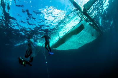 豪グレートバリアリーフ最大の再生計画、サンゴの卵数百万個採取へ