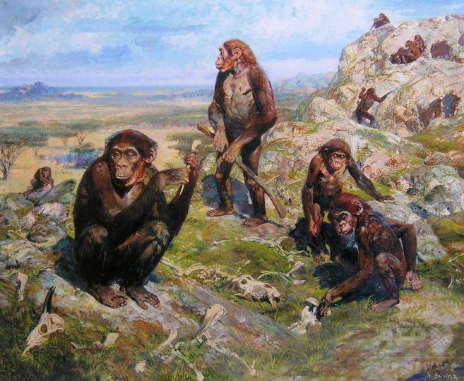 320万年前の猿人に「現人類に似た手」、道具使えた?