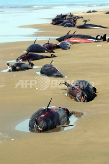 イラン南部でイルカが謎の大量死