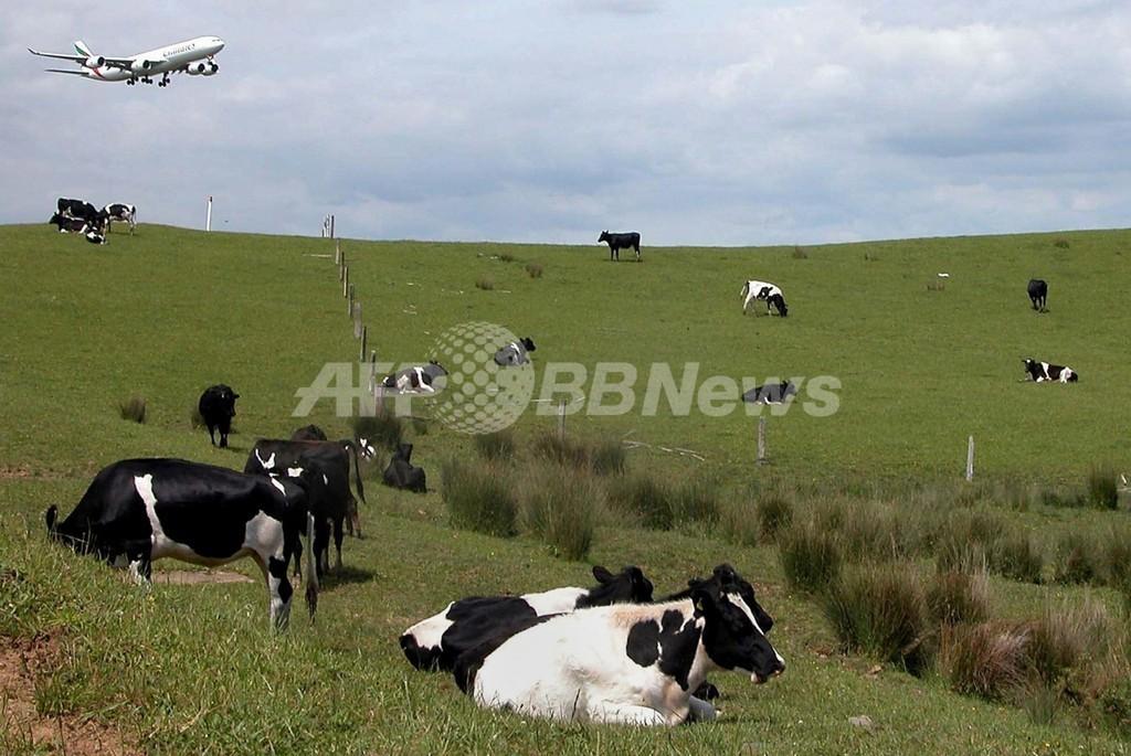 中国がニュージーランド産粉ミルク輸入禁止、NZ貿易相