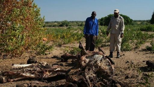 動画:ボツワナ、ゾウの狩猟禁止措置を解除 環境保護団体も賛否分かれる