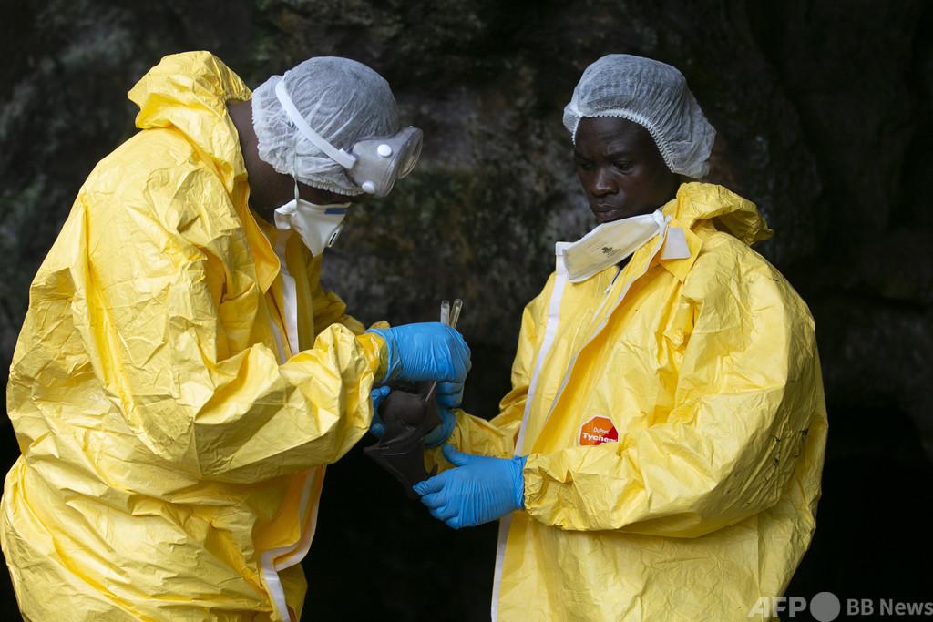 ガボンの「ウイルスハンター」、人類脅かす病原体を追う
