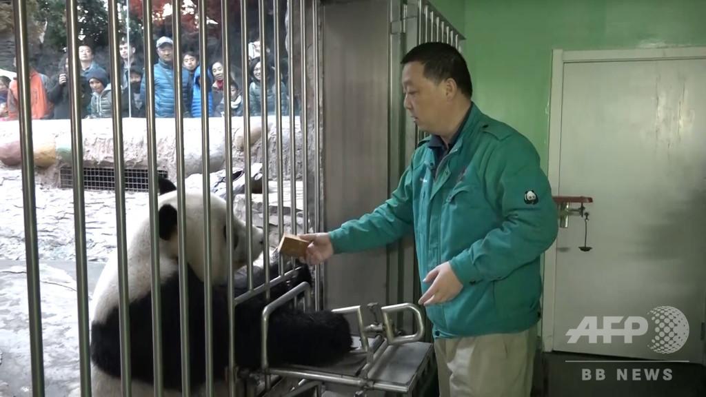 「食べて寝る」パンダのお世話 北京動物園の飼育係