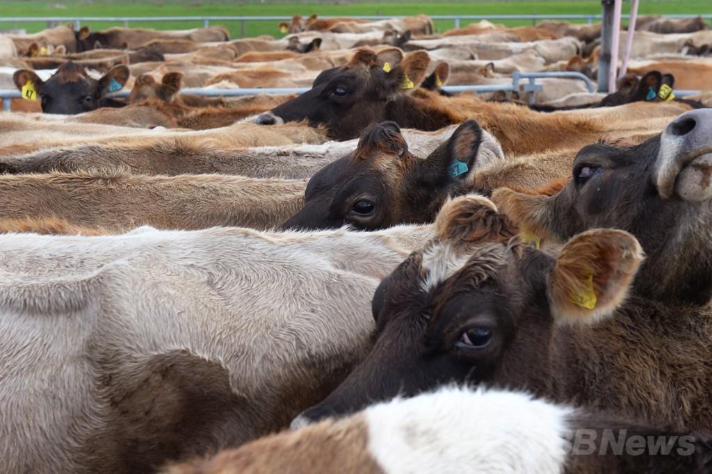 ドイツの牛舎でガス爆発、原因は牛から出たメタンガス