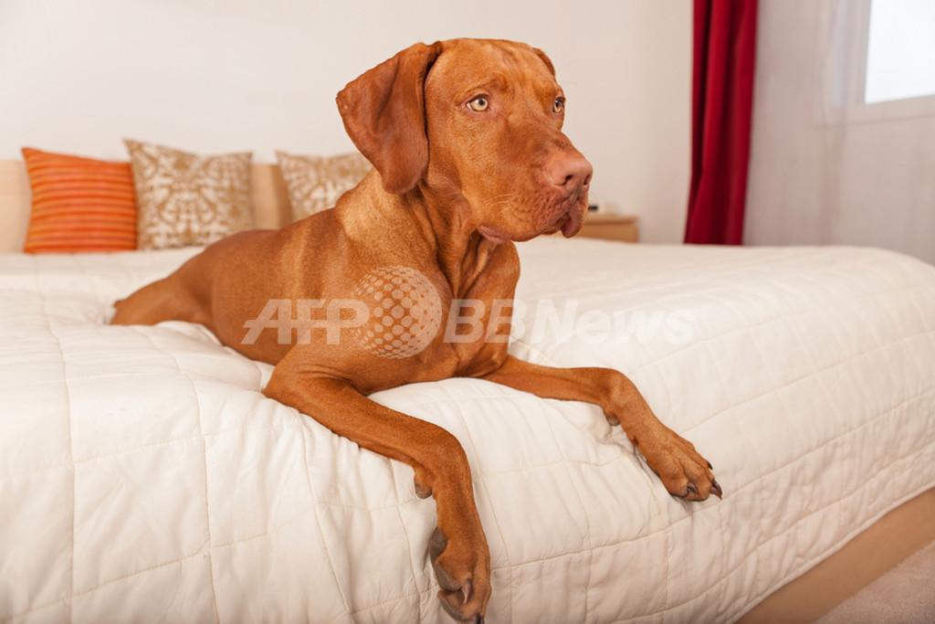 愛犬と旅するならどこへ行く?飼い主さん専用旅行ガイド