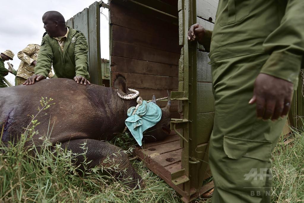 絶滅危惧のクロサイ8頭死ぬ、新保護区への移送後 ケニア