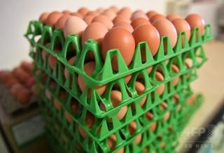 殺虫剤汚染の卵、デンマークで22トン ポーランドで4万個