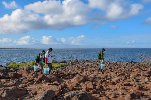 ガラパゴス諸島、外来種のネズミ駆除にドローンを初導入