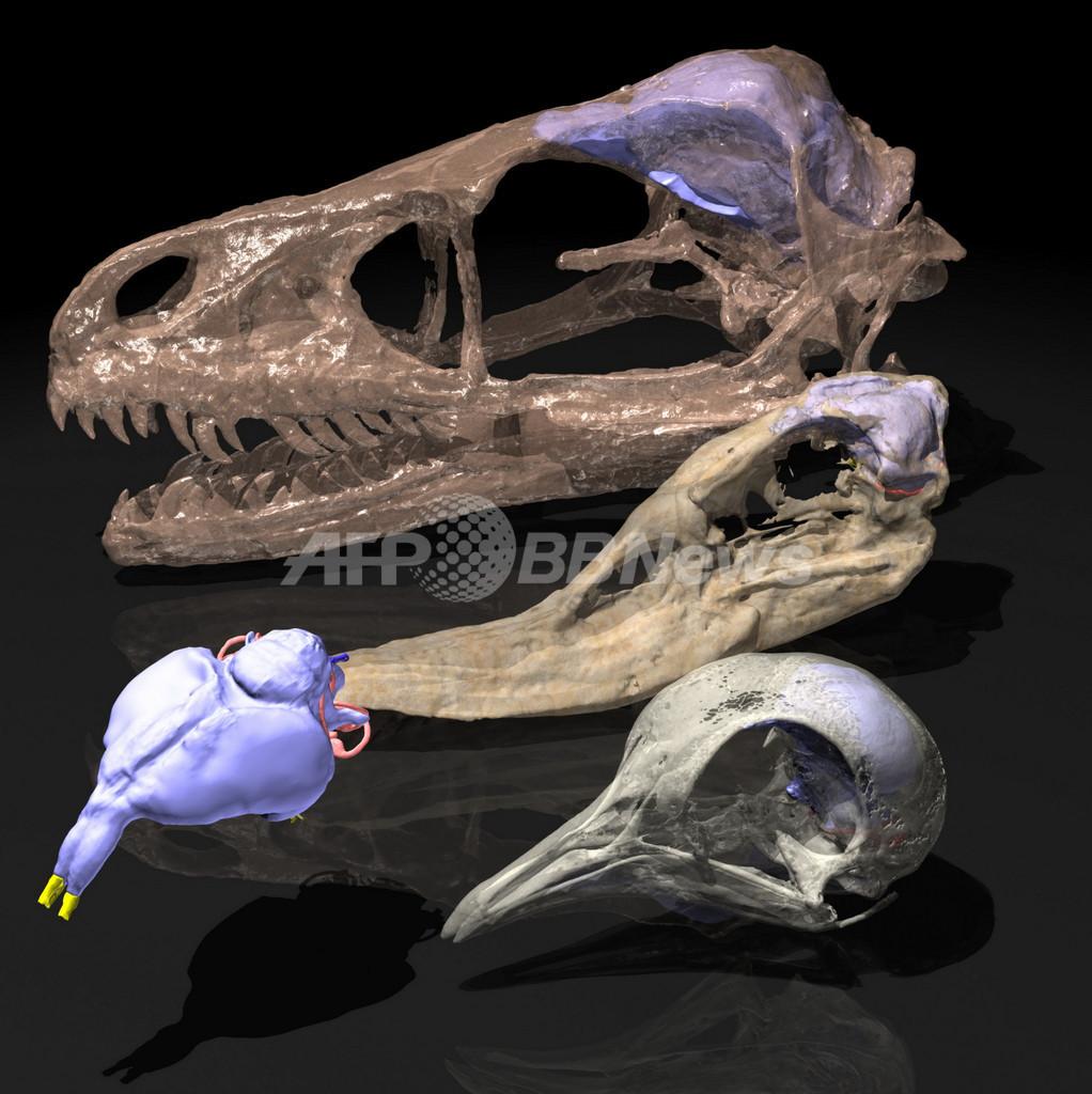 鳥は恐竜の鋭い嗅覚を受け継いでいる、カナダ研究