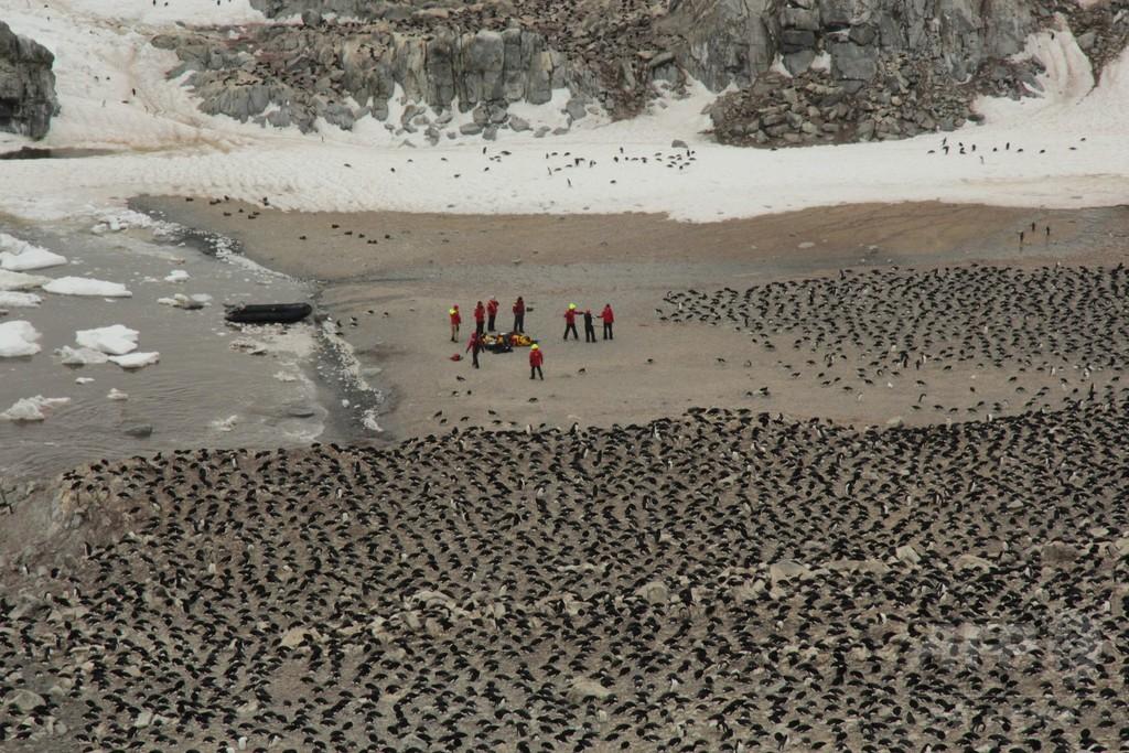 その数150万羽…アデリーペンギンの一大繁殖地、南極の離島で発見