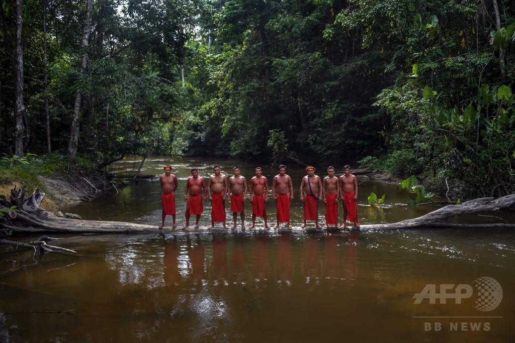 白人がもたらした死の伝染病はしか、生き延びたアマゾン先住民の新たな戦い