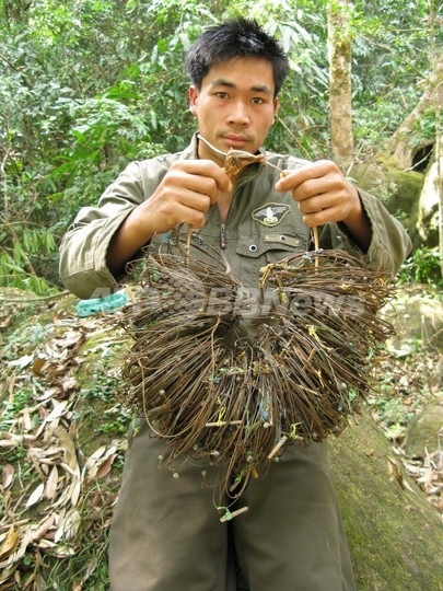 絶滅危惧種サオラ、ベトナムで15年ぶりに撮影 WWF