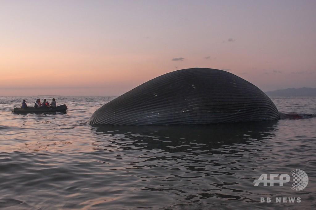 体長23mの巨大クジラの死骸漂着、死因不明 インドネシア